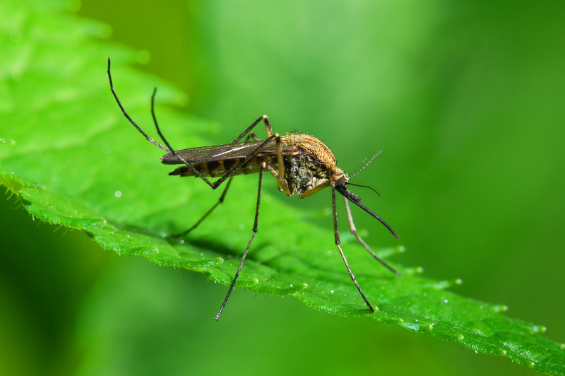 Lexington health department reports West Nile virus case in human